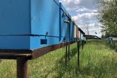 Bioagra-krolowe-na-terenie-Bioagry_04
